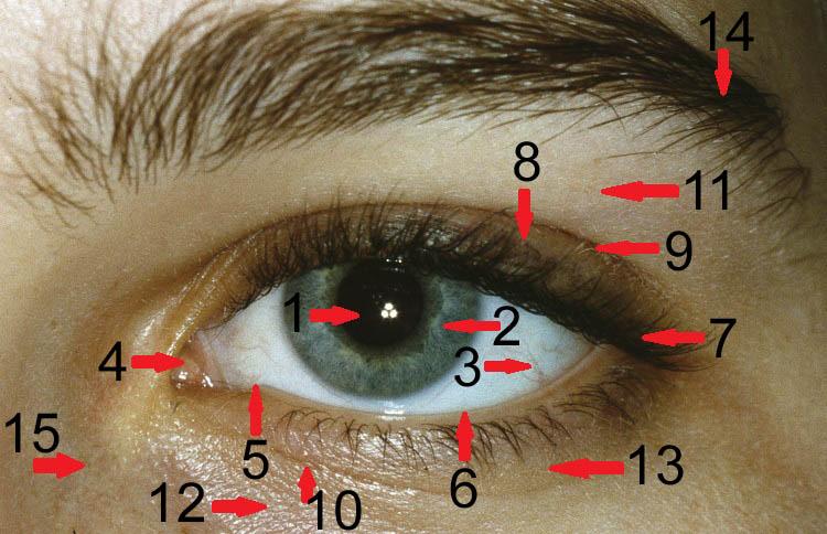 Augenfarbe sprüche Augenfarbe Sprüche