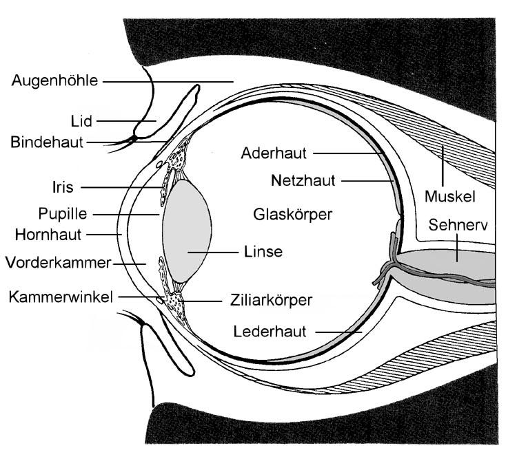 Auge Beschriftung