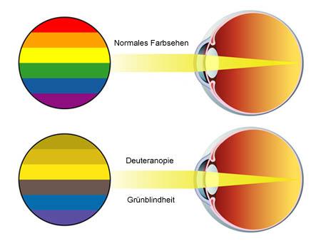 Farbensehen | Auge Online